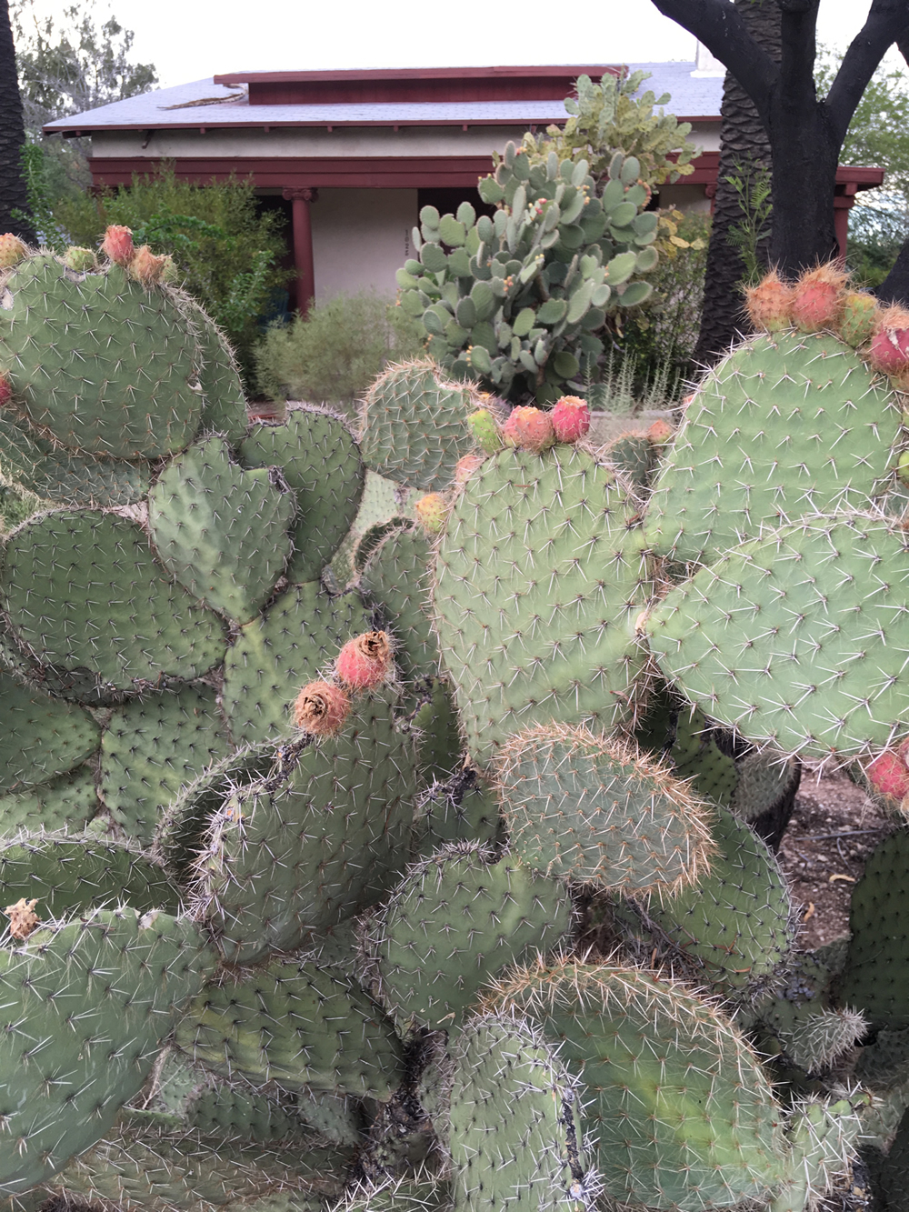 Prickly Pear, Tucson, AZ - WUNA Board Area Representatives page