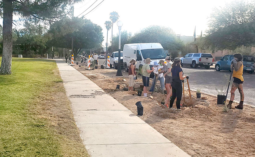 Planting Day at Catalina Park's New Desert Gardens