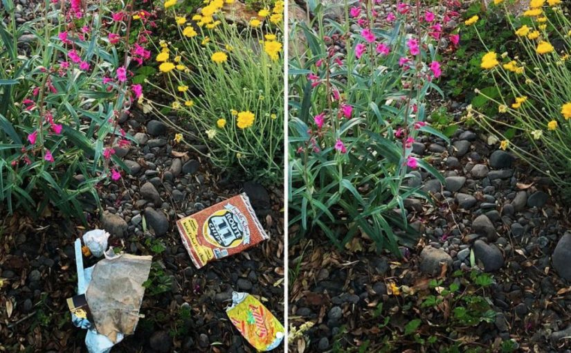 side by side pics showing before pic of wild flowers with scattered trash on left and the cleaned up beautiful wildflowers after pic on right